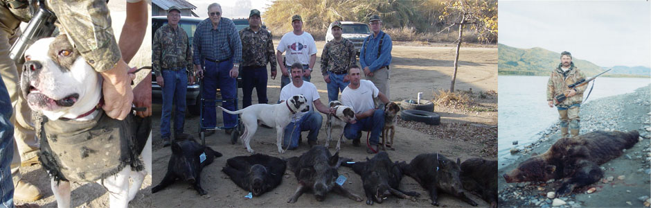 Trained Hunting Dogs Texas